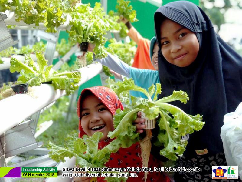Sayur Sehat Hasil Panen Sendiri